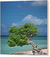 Fototi Tree - Aruba Wood Print