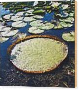 Foul Ball And The Lily Pads Wood Print