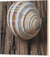 Found Sea Shell Wood Print by Garry Gay