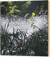 Fountain And Spring Flowers Wood Print