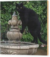 Fountain Cat Wood Print