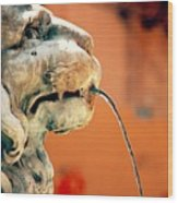 Fountain Lion Wood Print