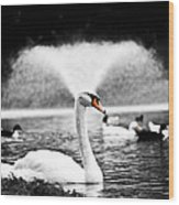 Fountain Swan Wood Print