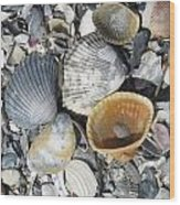 Four Beautiful Shells Wood Print