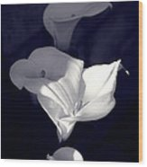 Four Calla Lilies In Shade Wood Print