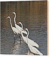 Four Egrets Fishing Wood Print