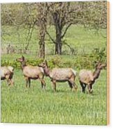Four Elk Wood Print