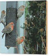 Four Finches Feeding Wood Print