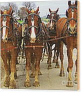 Four Horse Power Wood Print by B Wayne Mullins