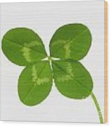 Four Leaved Clover For Good Luck Wood Print