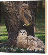 Four Owl Chicks In A Dark Forest Wood Print