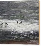 Four Pelicans By The Weir Wood Print