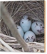 Four Red-winged Blackbird Eggs Wood Print by J McCombie