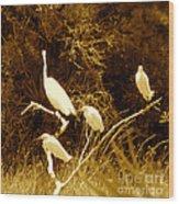Four Resting Egrets Wood Print