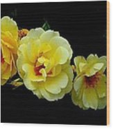 Four Stages Of Bloom Of A Yellow Rose Wood Print