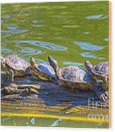 Four Turtles Wood Print