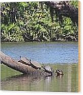 Four Yellow Bellied Turtles Wood Print
