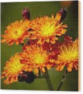 Fox-and-cubs Wood Print