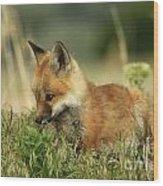 Fox Baby Wood Print