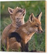 Fox Cub Buddies Wood Print by William Jobes