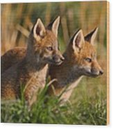 Fox Cubs At Sunrise Wood Print