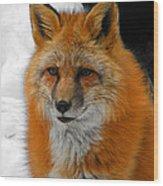 Fox Gaze Wood Print