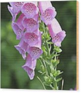 Fox Glove In Bloom Wood Print
