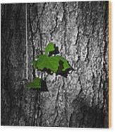Fox Grape On Pine Wood Print