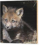 Fox Kit In Den Wood Print