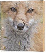 Fox Kit In The Grass Wood Print