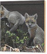 Fox Kit Siblings Wood Print by RJ Martens