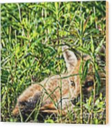 Red Fox Pup Hiding Wood Print