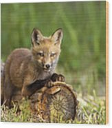 Fox Pup In The Morning Light Wood Print