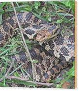 Fox Snake Wood Print