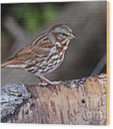 Fox Sparrow Pictures 16 Wood Print
