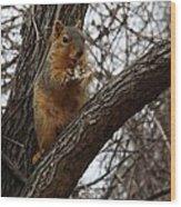 Fox Squirrel 1 Wood Print