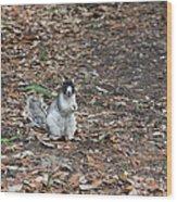 Fox Squirrel Curious Wood Print