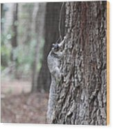 Fox Squirrel Vertical Wood Print