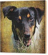 Fox Terrier Dog Wood Print