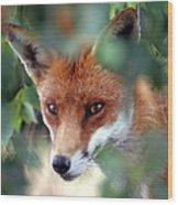 Fox Through Trees Wood Print by Tim Gainey