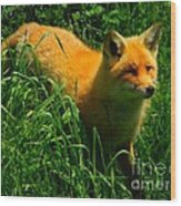 Fox Trot Wood Print