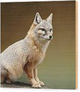 Foxes Wood Print