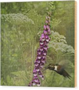Foxglove Queen Ann's Lace And The Hummingbird Wood Print by Diane Schuster