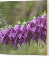 Foxgloves Wood Print