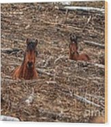 Foxhole Mustangs Wood Print