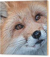 Foxy Lady Wood Print by Bianca Nadeau
