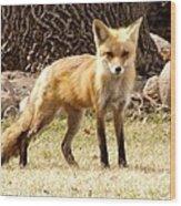 Foxy Momma Wood Print