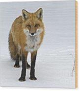 Foxy.. Wood Print