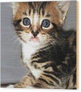 Foxy The Kittens Big Eyes Wood Print