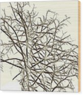Fractal Ghost Tree - Inverted Wood Print by Steve Ohlsen
